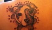 tatuaje caini (8)