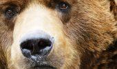 """""""Şi-a lipit botul de faţa pădurarului. Ochii ursului aminteau de cei ai puiului ucis acum un an. Atât a mai putut vedea"""""""