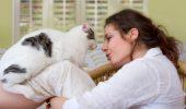 Sunt pisicile empatice sau doar asociaza bucuria stapanului cu primirea unor recompense?
