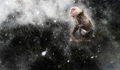 Top 10 cele mai TARI poze din LUME! Natura asa cum nici nu ti-ai imaginat-o! Vezi poza castigatoare, o sa ramai cu gura cascata!