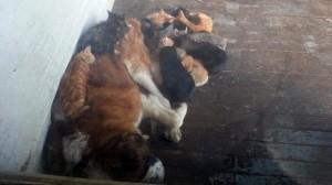 Dragoste fără frontiere. Un câine are grijă de zeci de pisici