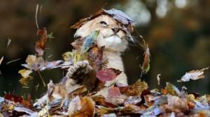 Un pui de leu se bucură din plin de frumusețea toamnei