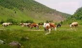 Baltata romaneasca