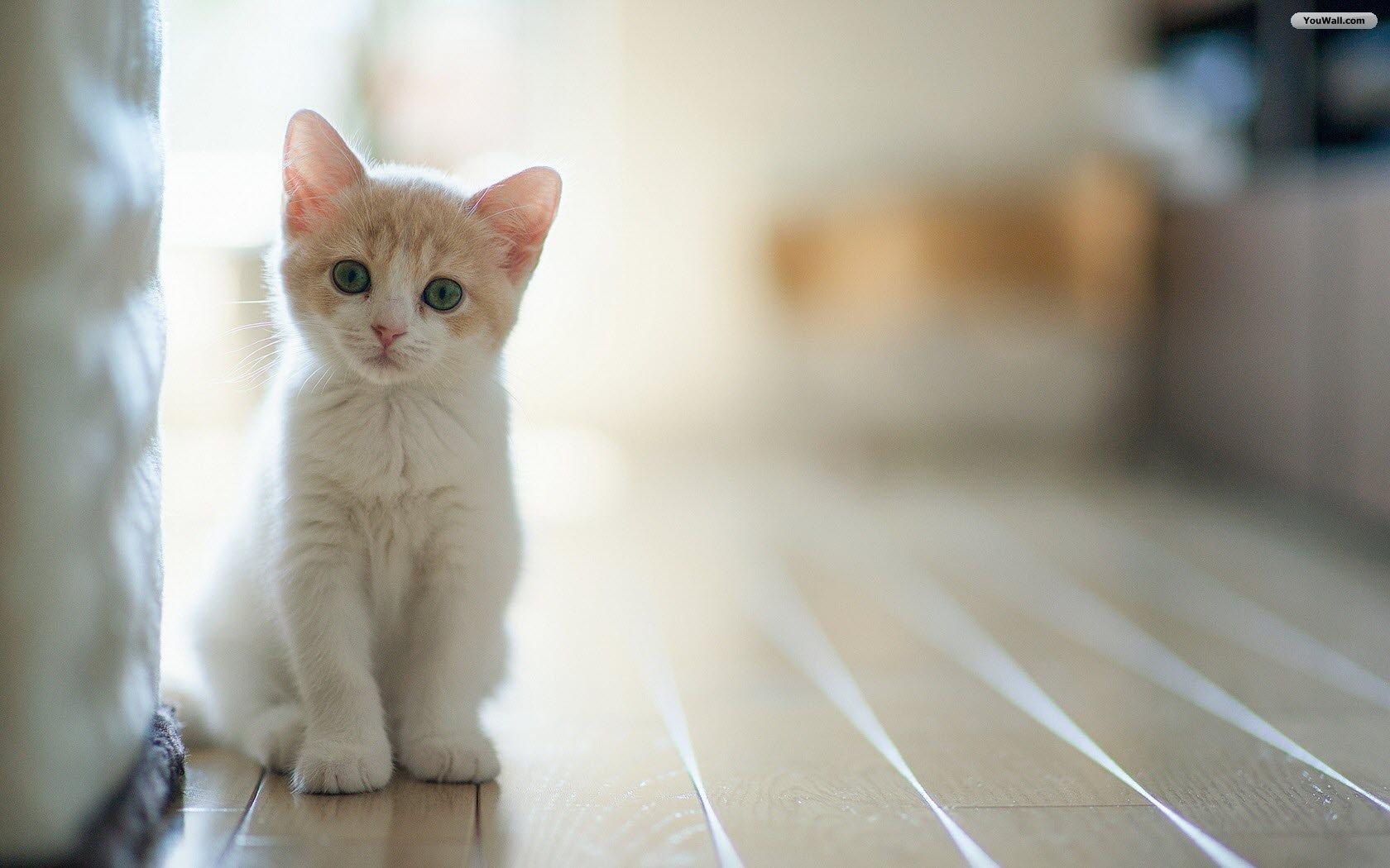 Cute-Cat-06