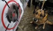 Stray+dogs+Kiev+(3)