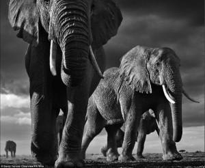 Și-a pus viața ÎN PERICOL pentru a realiza fotografii uimitoare cu animale