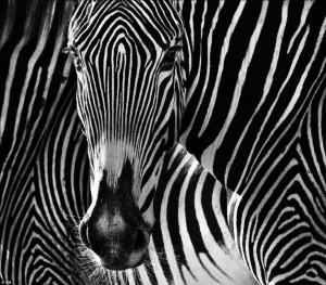animale_6