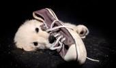 anxietate roade pantofi