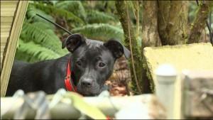 Tot ce prinde, aduce acasă. Un câine și-a speriat DE MOARTE stăpânul, după ce i-a făcut un cadou HORROR