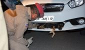 ULUITOR. A condus zeci de kilometri cu un câine blocat în grilajul mașinii
