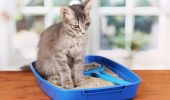 cat-in-litter-box