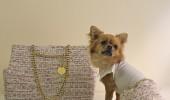 Rochita si geanta pentru catei, confectionate din material Coco Chanel - pret 337 $