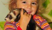 Dihorul, unul dintre cele mai îndrăgite animale de companie.