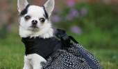 Rochita cu pene de la Houte Puppy Couture -185 de dolari
