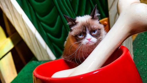 Grumpy Cat a ajuns la DisneyLand! Şi l-a cunoscut pe ADEVARATUL Morocanos!