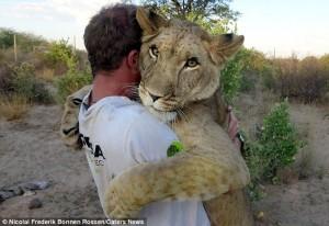 ESTE REAL. O leoaică, afectuoasă cu cei care i-au salvat viața