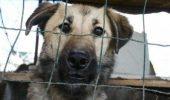 Sondaj: Românii sunt împotriva uciderii câinilor fără stăpân