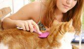 Problema parului de pisica!