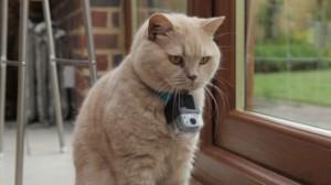 Pisicile se pot răsfăța într-un hotel de lux ce le este dedicat în exclusivitate! Metode INCREDIBILE de relaxare pentru feline