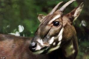 A fost zărit cel mai RAR ANIMAL din lume