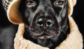Dog Fashion Animal Zoo