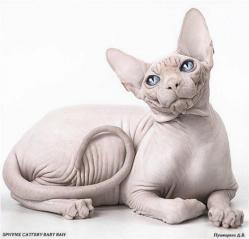 Vreau o pisica. Ce fac?