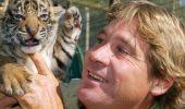 PANICĂ la Grădina Zoologică deschisă de Steve Irwin! 50 de oameni au privit cum un îngrijitor se luptă cu un trigru