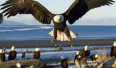 """Senzaţie! O """"haită"""" de vulturi chelioşi au făcut un RAID în parcarea unui supermarket"""