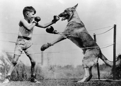 Boxul... sportul celor tari!