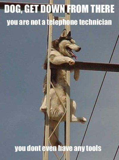 Husky, nu esti electrician! Da-te jos de acolo! Nici macar nu ai trusa de scule la tine!