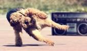 Un caine care danseaza. Breakdance. Ha?...