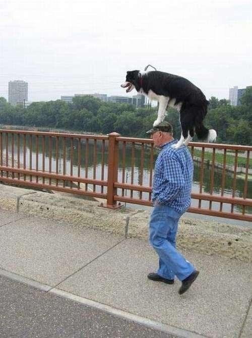 Salut, vecine! Imi plimb cainele, tu ce faci?