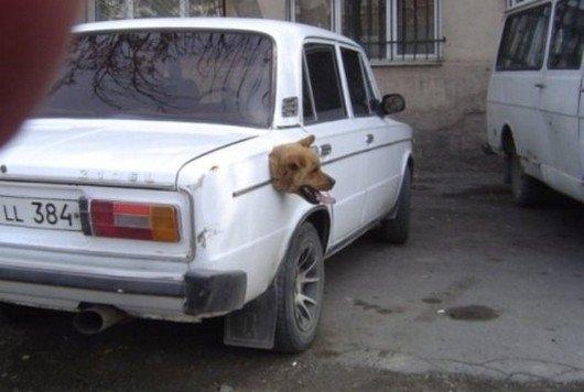 Masina Hybrid care merge cu benzina si cu ... caine.