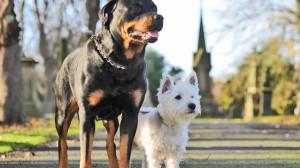 Un rottweiler și un terrier s-au îndrăgostit și au dat naștere unor pui minunați