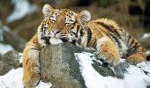 Cea mai veche grădină zoologică din lume, locul în care animalele chiar contează