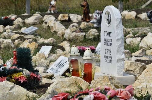 Cimitirul animalelor 1