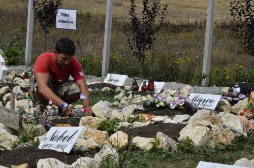 Cimitirul animalelor 4