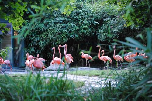 Flamingo_Vienna_Zoo_Schönbrunn_2010