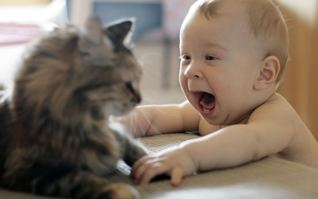 Funny-Cat-And-Baby-Pictures-640x400