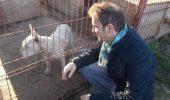 """Mihai Trăistariu vrea să salveze de la moarte maidanezii din Constanţa. A organizat primul """"Crăciun al câinilor"""""""