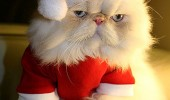 Santa-Cat-l