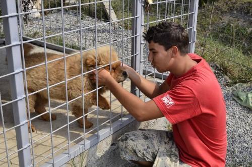 Unul dintre cateii care inveselesc cimitirul animalelor