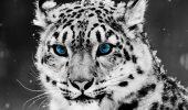 Animalele de la Grădina Zoologică din Brașov vor avea parte de o iarnă CUMPLITĂ