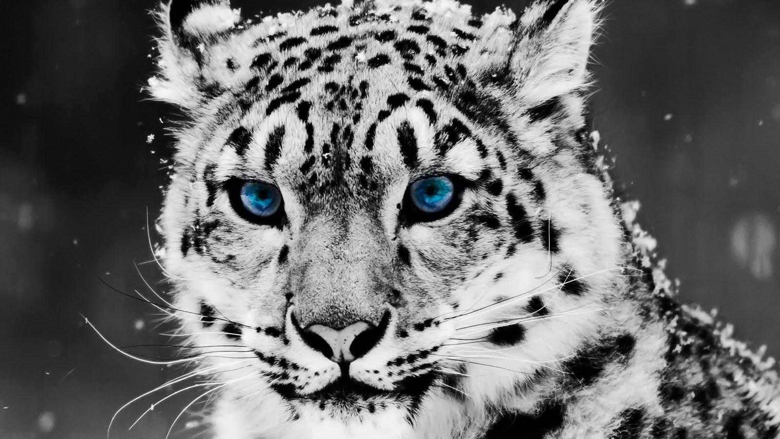 animal-pak-animals-zoo-park_226964