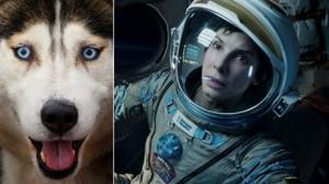 IATĂ care este mare câștigător al Oscarurilor canine 2013