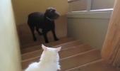 Nu întotdeauna câinii dețin puterea. Iată un exemplu că și felinele se pot impune în fața marilor rivali. VIDEO