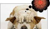 Cum să-ţi pregăteşti câinele pentru spectacolul luminos dintre ani?