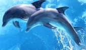 DESCOPERIRE ULUITOARE! Cum formează balenele şi DELFINII culturi şi societăţi asemeni OAMENILOR