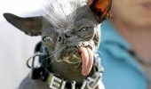 TRIST! Vezi ce s-a întâmplat cu cel mai urât căţel din lume