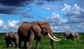 Strămoșii simpaticului Dumbo batjocoriţi cu spray paralizant